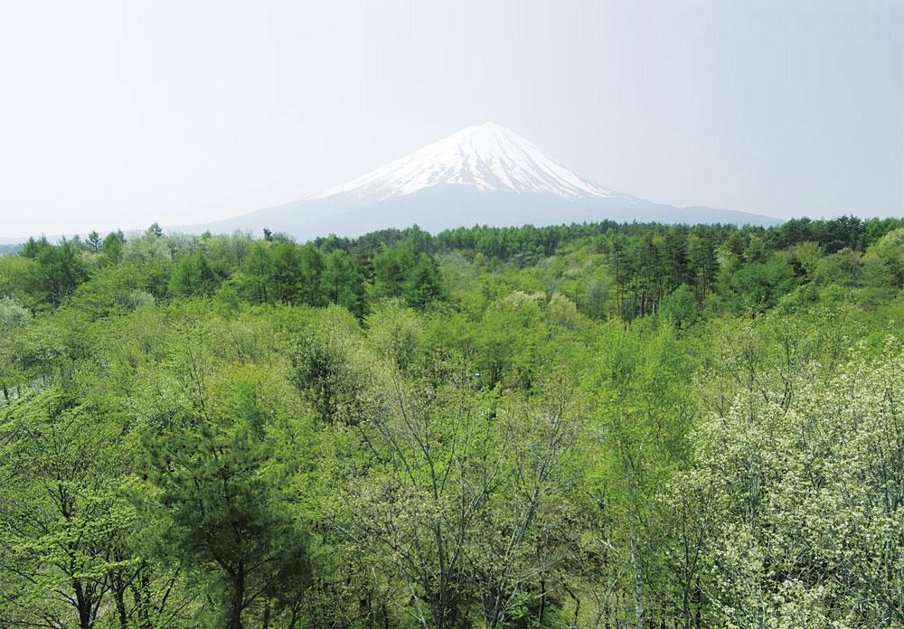 富士桜高原別荘地から見た富士山